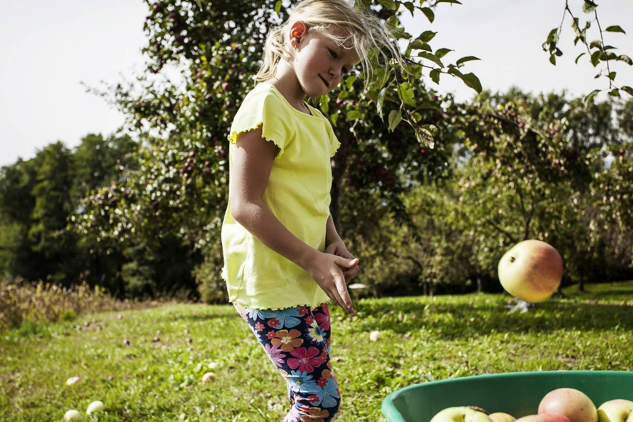 Geschmack der Kindheit - Apfelernte Mostbarkeiten
