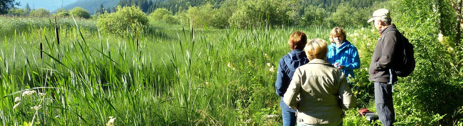 <p>Magische Momente Sommer, Hörfeldmoor Mittelkärnten</p>